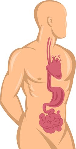 H pylori and cardiovascular disease
