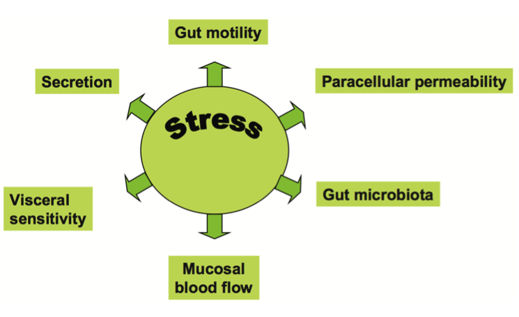 stress and low stomach acid