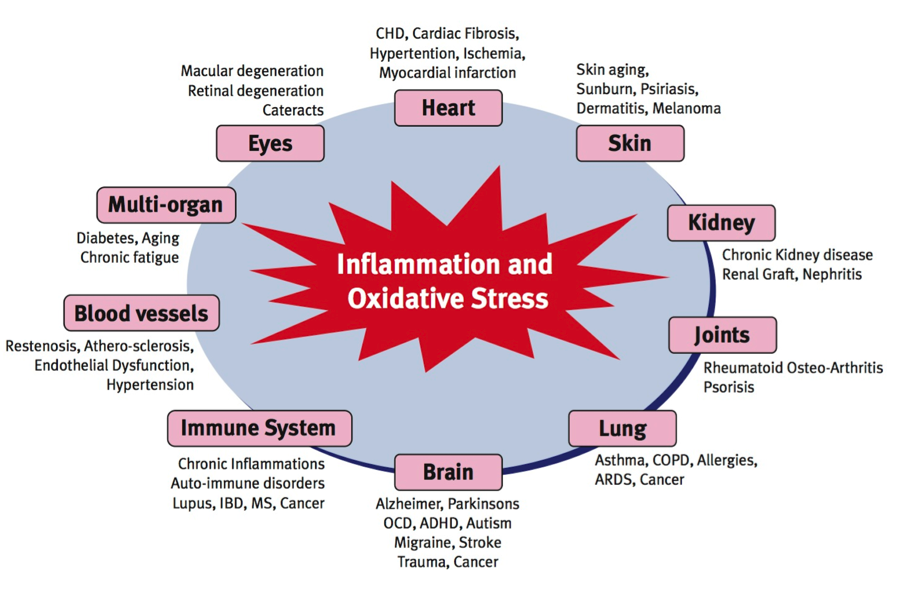H pylori and oxidative stress