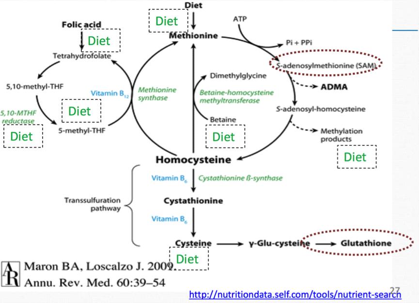 H pylori and vitamin B12