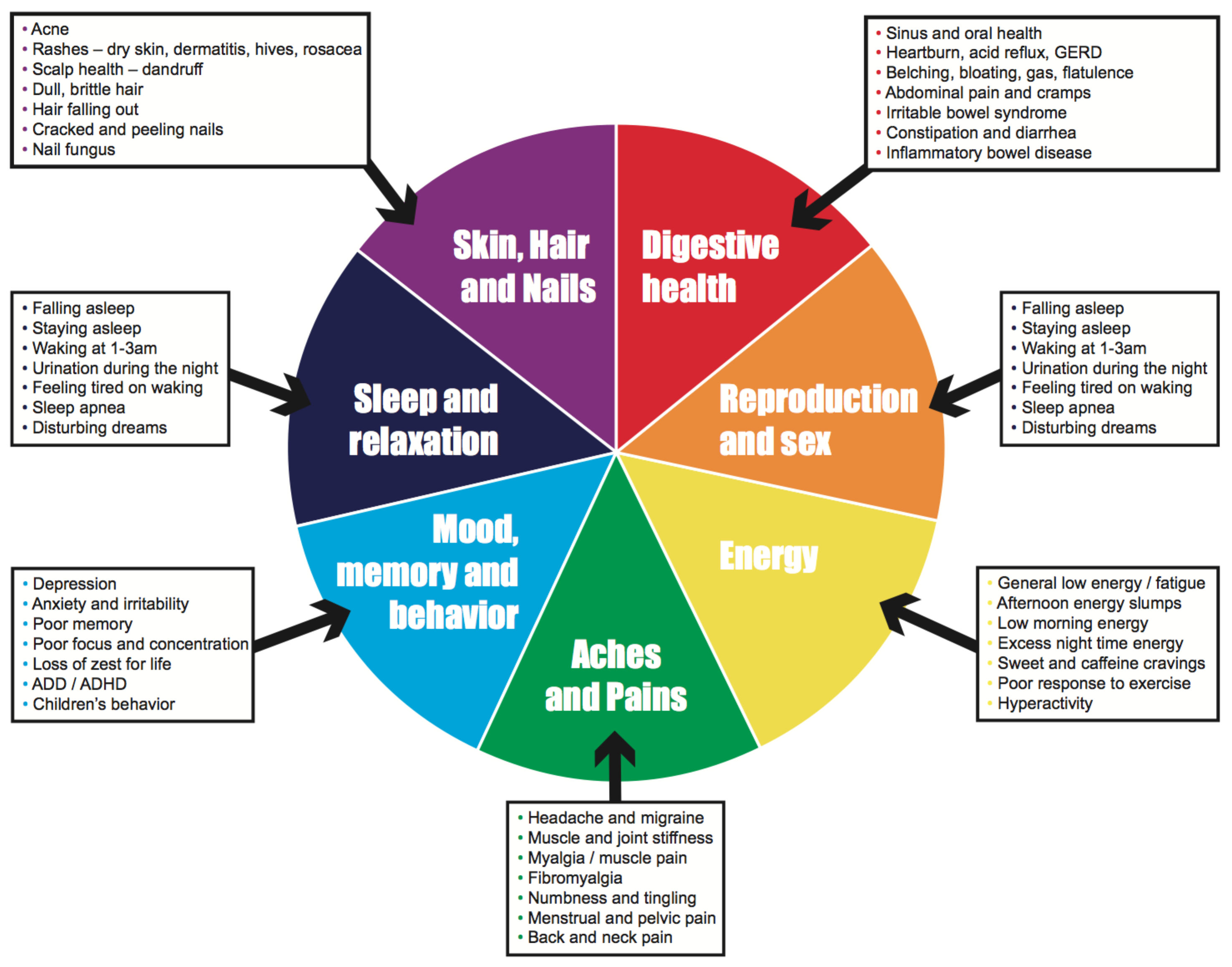 Food Skin Diagram - Auto Wiring Diagram Today •