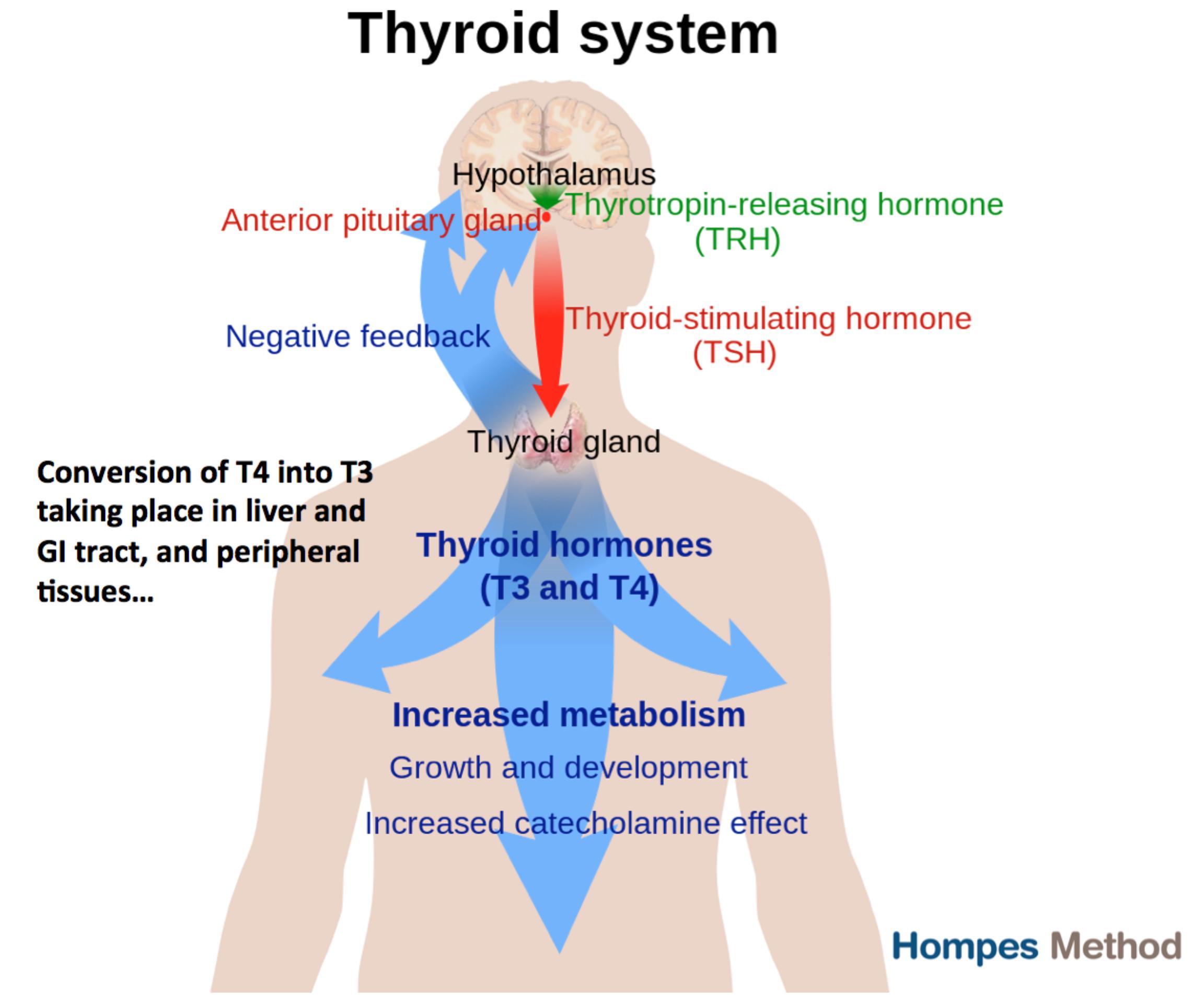 2018 Nails And Thyroid H Pylori Symptoms